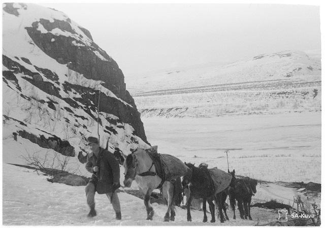 SA-kuva. Huoltoa muuleilla Litsan tuntureilla. Petsamo 1943.04.10